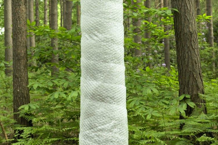 Envolver un árbol alienta la humedad y el decaimiento.