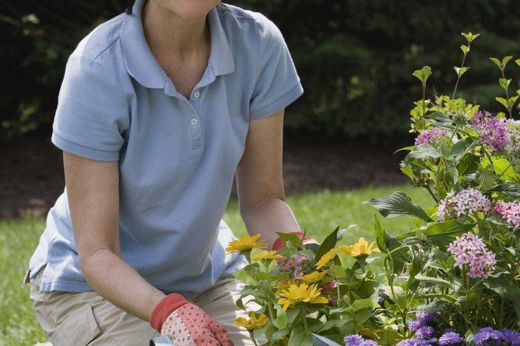 Muchos centros de jubilados ofrecen una variedad de actividades para los ciudadanos mayores de edad.