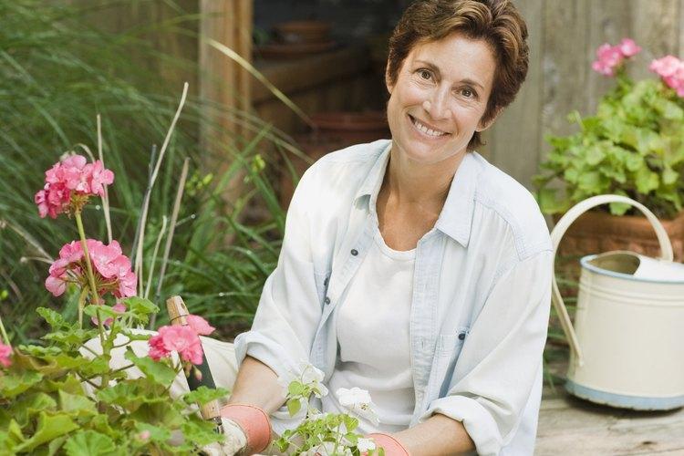 En las empresas de jardinería profesional, los jardineros principales tienen importantes responsabilidades que varían ampliamente.