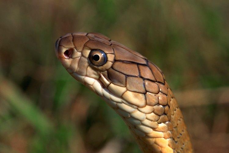 Hay varios métodos para alejar a las serpientes de tu casa.