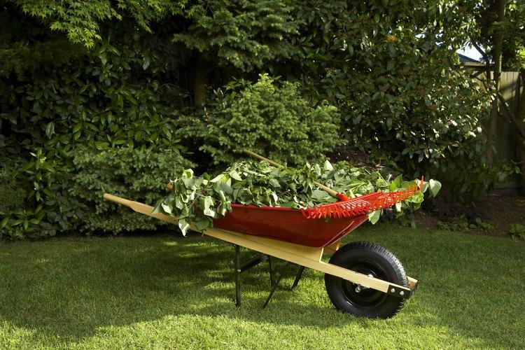 Protege el césped de tu jardín de los hongos.