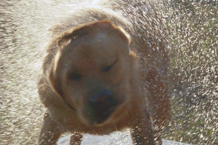 Encuentra el tratamiento adecuado para tu perro en caso de que sufra de puntos calientes.