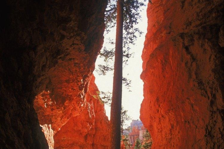 El agua pasa a través de la piedra caliza para formar barrancos profundos.