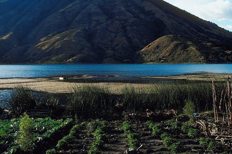 Los andisoles son suelos agrícolas ricos que se encuentran cerca de los volcanes.