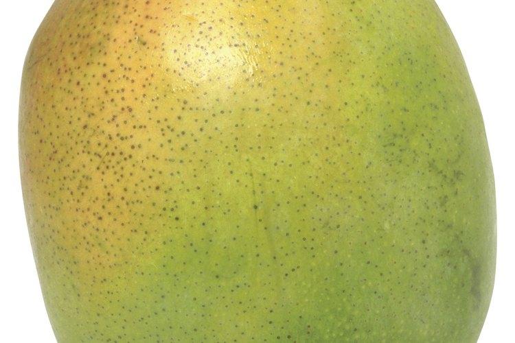 La fruta del mango contiene una corteza dura que encierra una semilla o pepita pequeña, con forma de riñón.