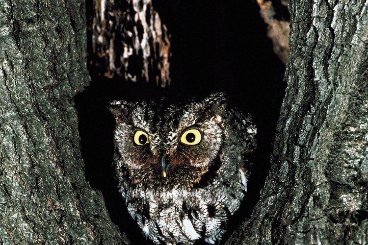 Monta la casa del búho entre 10 (3,04 mts) y 15 pies (4,57 mts) de altura en un árbol.