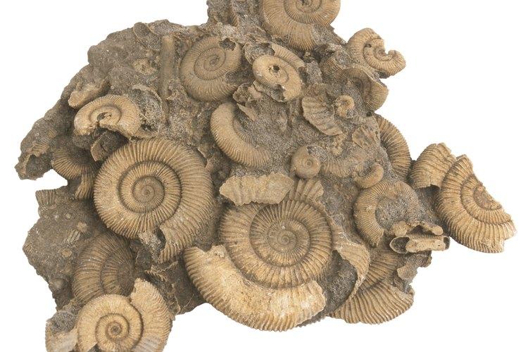 Los paleontólogos usualmente conducen expediciones de campo para encontrar fósiles, y después llevan a cabo experimentos de laboratorio en ellos.