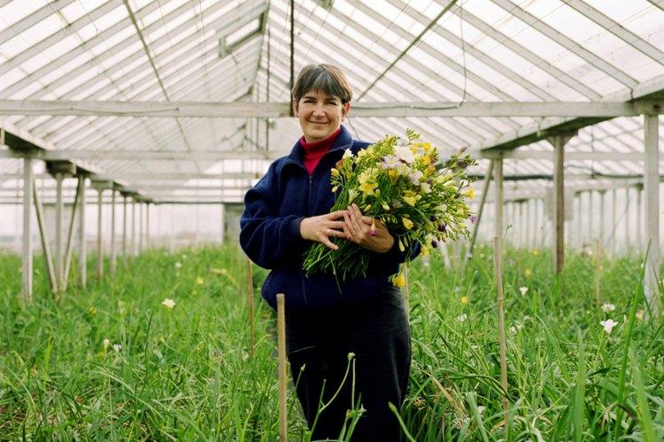 Los invernaderos son ideales para cultivar plantas exóticas.
