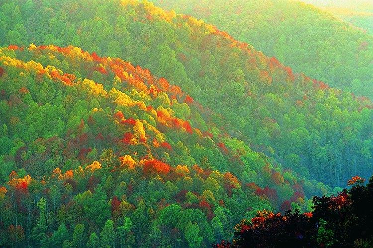Las Blue Ridge Mountains del norte de Georgia proporcionan algunas de las oportunidades más salvajes del estado para acampar.