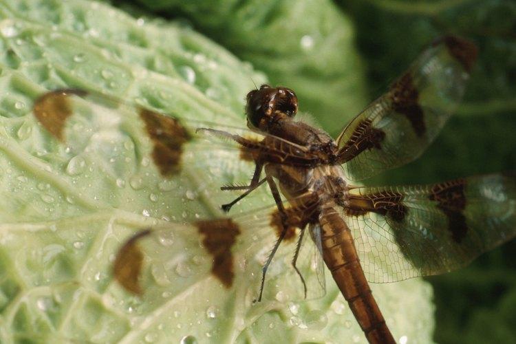 El óxido le puede aportar a la planta una defensa contra insectos y hongos.