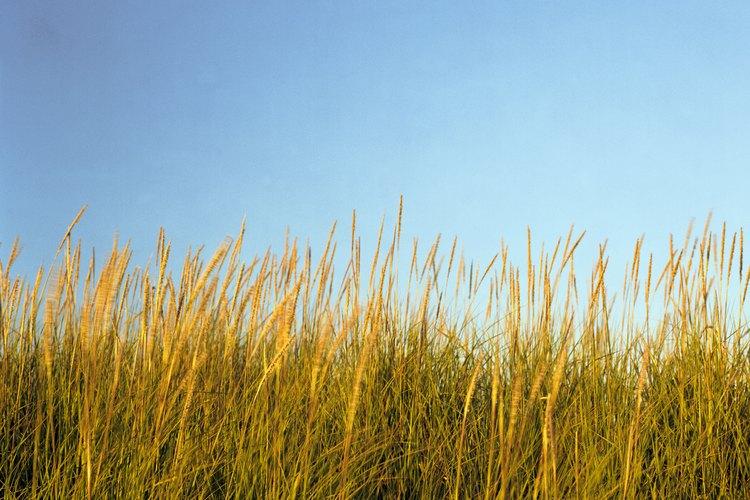 Las cubiertas expuestas de desmalezadoras tragan hierbas altas con facilidad.