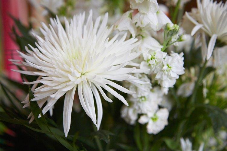 Se debe tener cuidado de no regalar flores blancas.