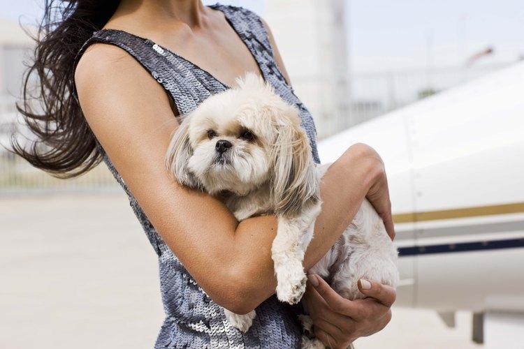 Si tu perro vomita, limítale el acceso a la comida e introduce en su dieta alimentos suaves.