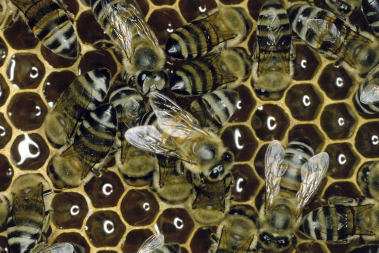 La cera de abejas es una pomada capilar natural.