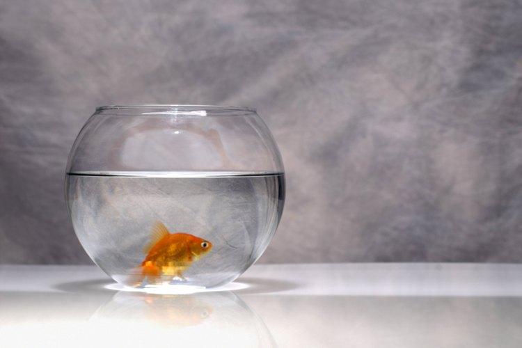 Los peces de acuario necesitan luz artificial, pero no necesariamente de color.