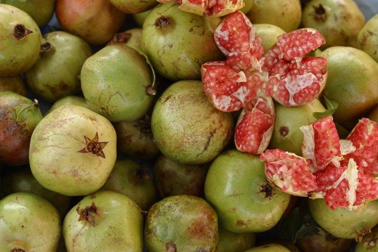 La recolección del fruto se da en el otoño.
