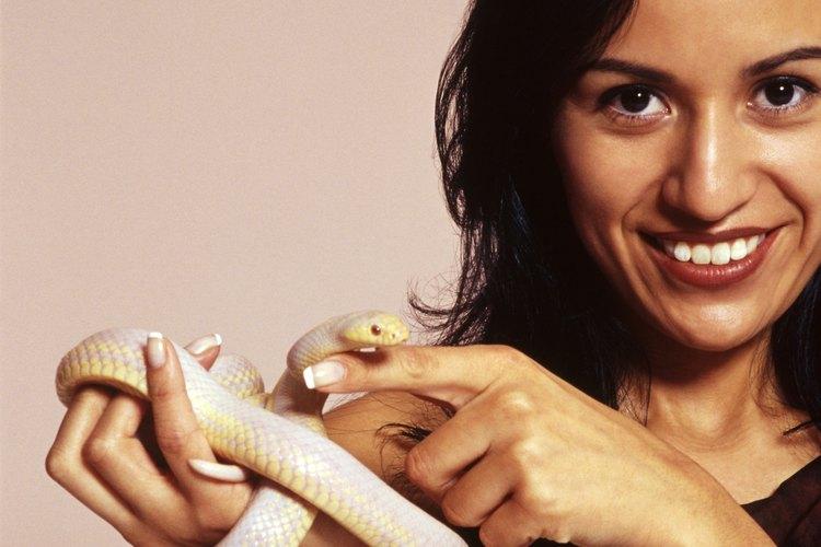 Las serpientes blancas son generalmente consideradas un símbolo positivo.