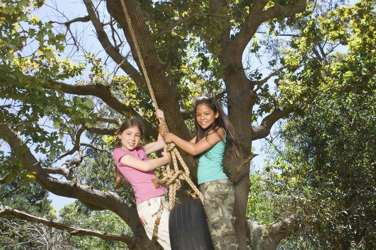Cuélgalo de la rama de un árbol.