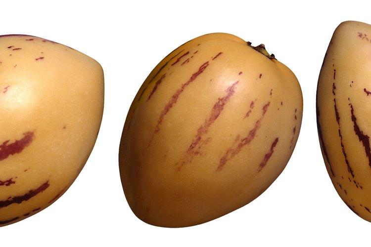 Corta un pepino melón para usar en una ensalada de fruta.