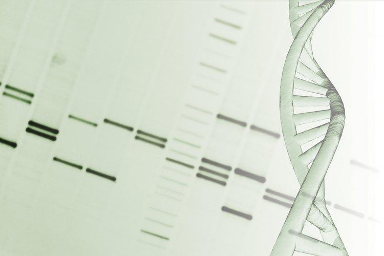 El ADN, el código genético biológico, es una macromolécula importante para los seres vivos.