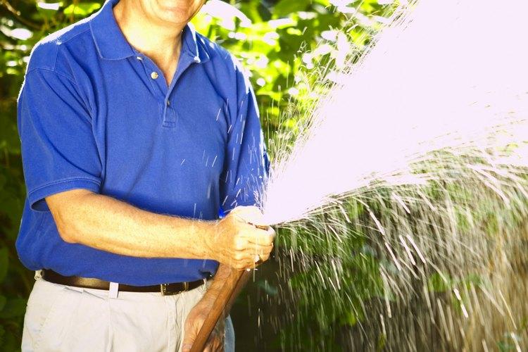 Rocía la planta con un fuerte chorro de agua para desalojar a las plagas restantes.