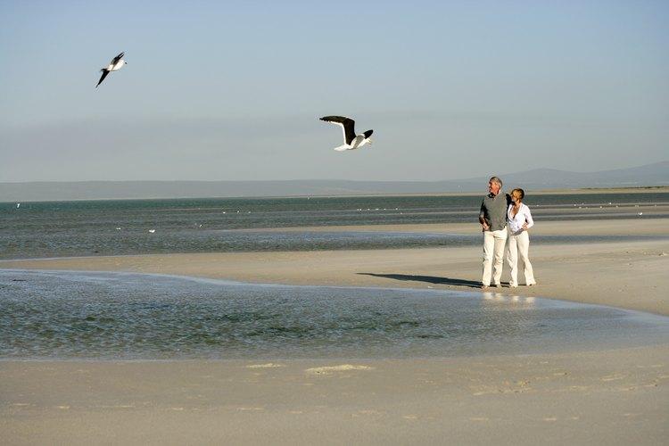 Principiantes y expertos observadores de aves han hecho muchas peregrinaciones a la costa del Golfo de Alabama