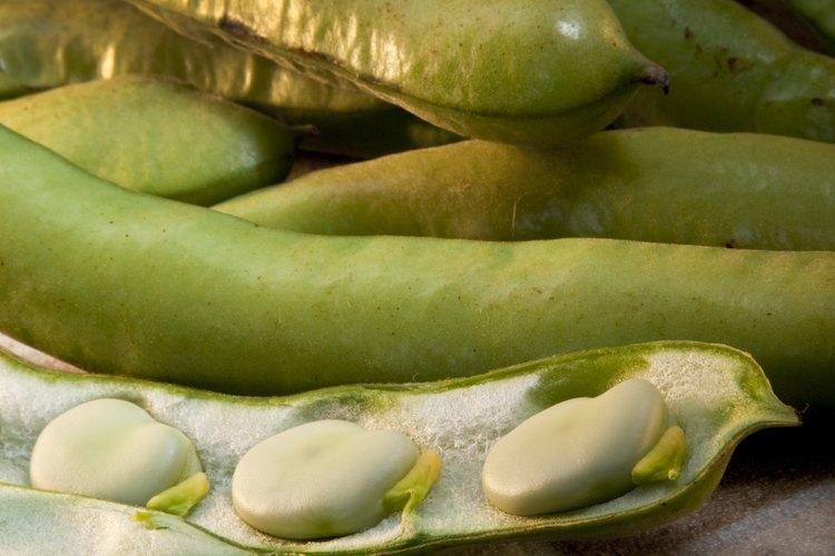 Las vainas de guisantes se pueden comer crudas, o suavizar con vapor.