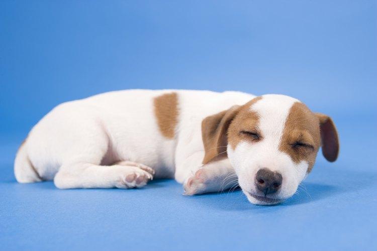 Hay varias maneras de conseguir que tu perro se sienta cómodo la primera noche en casa.