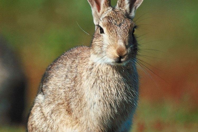 Los conejos son animales muy tiernos, pero pueden llegar a morder.