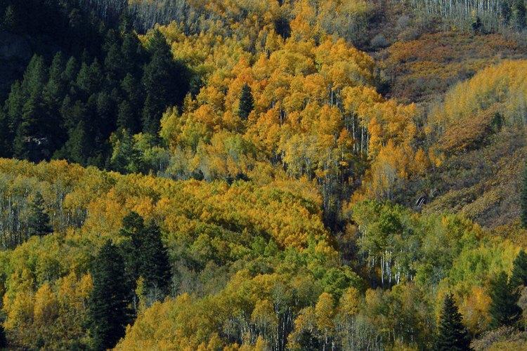 Las flores silvestres y el senderismo atraen a los visitantes a las zonas rocosas de Colorado en verano.
