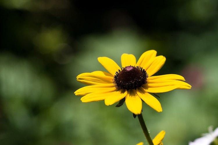 Algunas plantas florecen en jardines de verano calientes.
