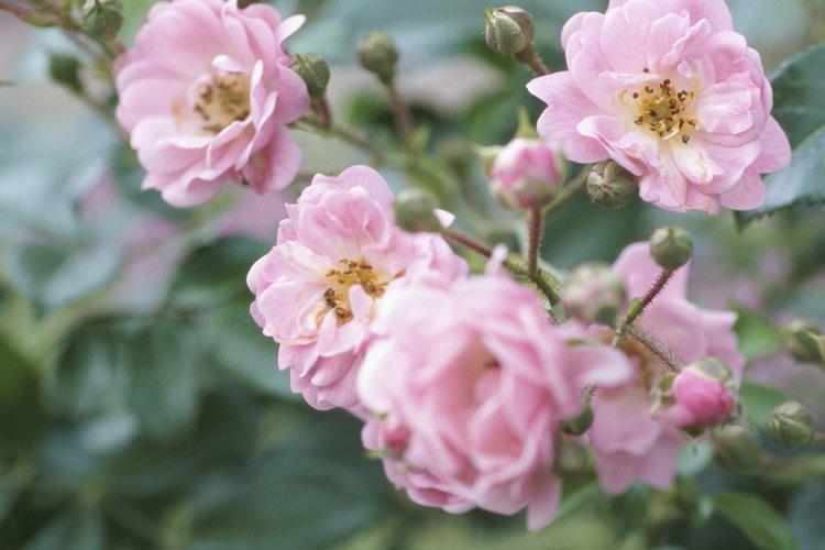 Mantener las plantas sanas es la mejor manera de luchar contra las plagas de insectos.