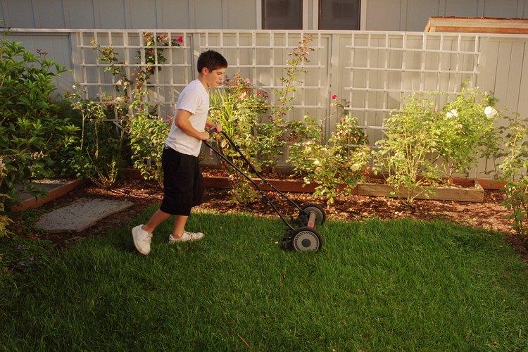 Coloca las plantas a la misma profundidad que estaban creciendo en sus contenedores de vivero.