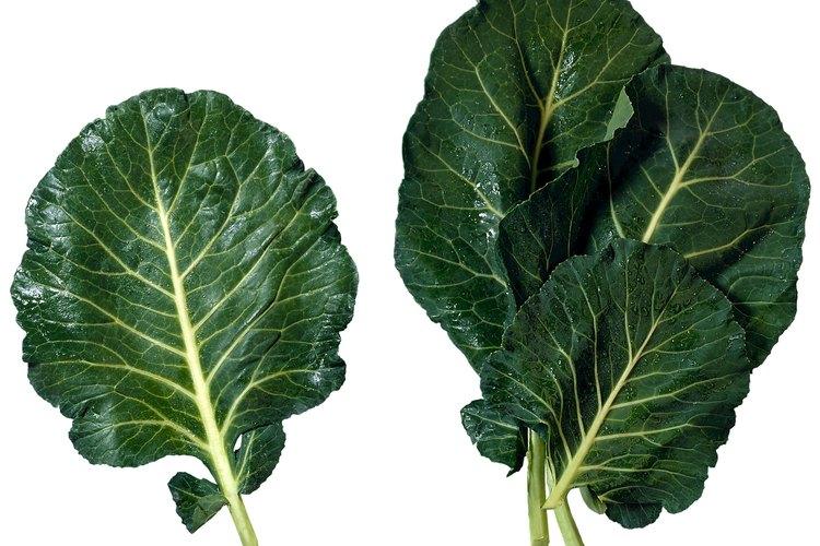 Las berzas tienen hojas grandes y en ocasiones pueden sustituir a las coles en las recetas.