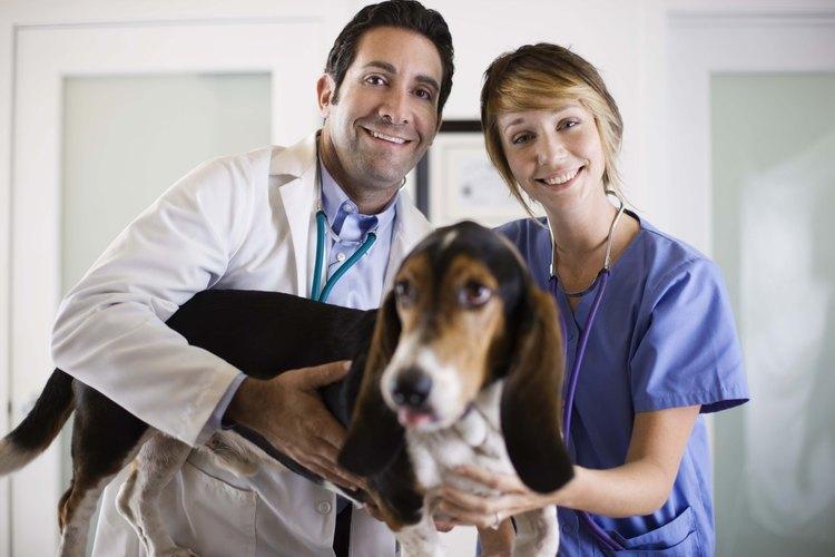 La pioderma canina afecta a la piel del perro, pero no es contagiosa para los humanos.