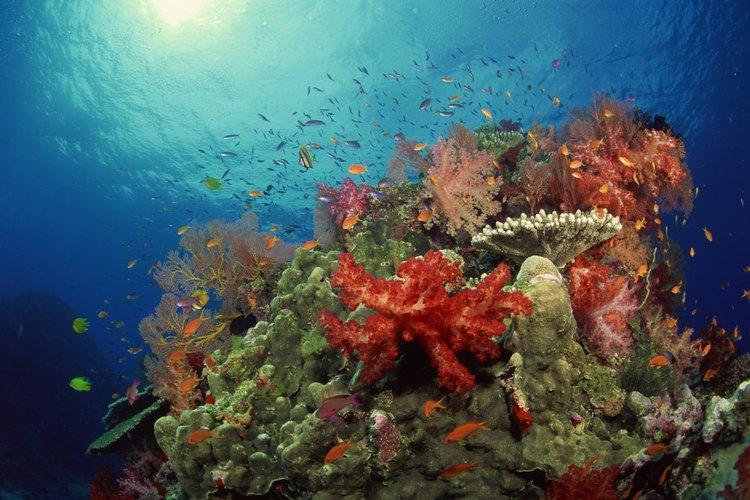 Los arrecifes de coral son hábitat de un sin fin de especies marinas.