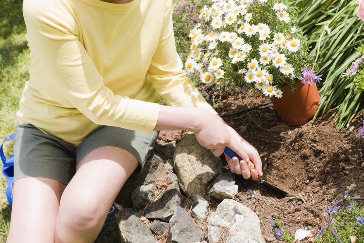 Mover una especie de planta a un nuevo ambiente puede causar problemas para las  plantas en ese nuevo ambiente.