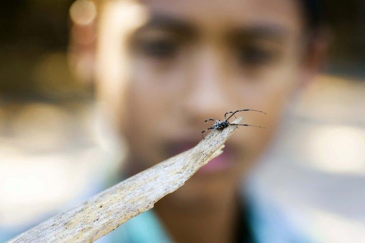 Enseñar a los niños a respetar a las arañas es la mejor forma de evitar las mordeduras.