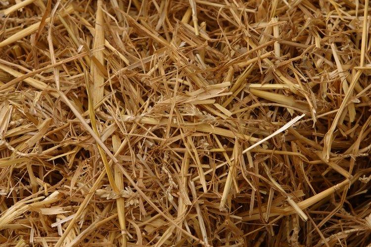 La paja orgánica y sin pesticidas es ideal como relleno del cajón para anidar.