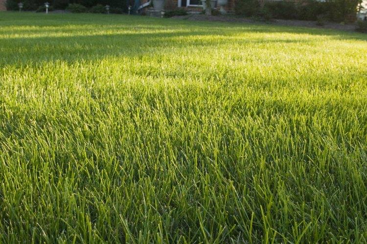 Evita fertilizar tus plantas de jardín con fertilizante de invierno para césped.