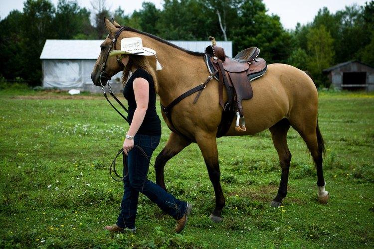 Los ranchos equinos dan trabajo a muchos niveles de capacidad.