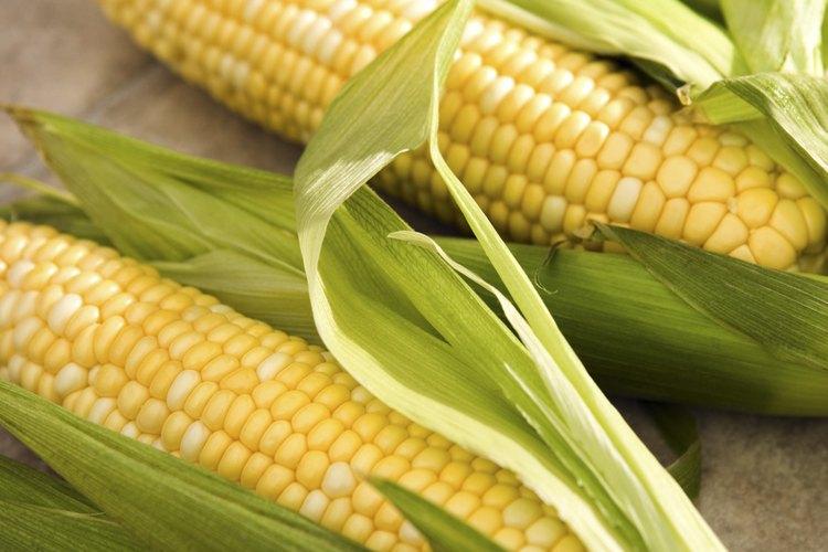 Las larvas de gusano elotero pueden dañar los cultivos de maíz.