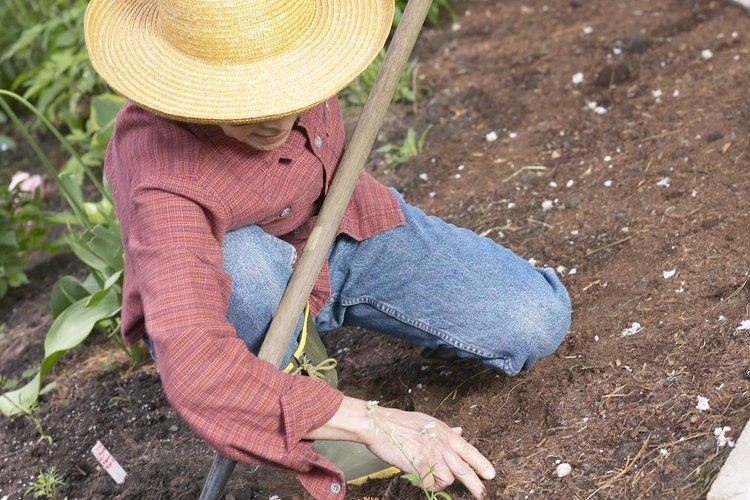 Ara y rastrilla el suelo a fondo una vez que notes la presencia de mosquitos y otros insectos.