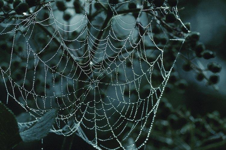 La mayoría de las arañas crean sus telarañas en lugares oscuros y frescos.