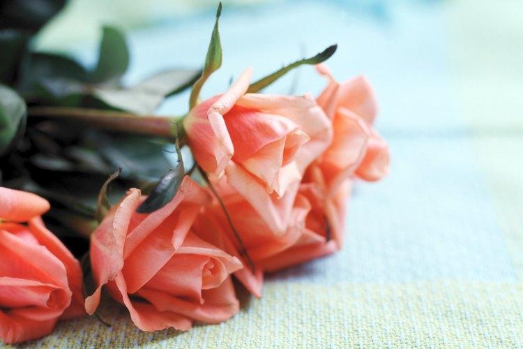 Arregla y exhibe tus flores en un florero lleno de agua y alimento floral.