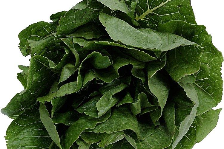 La espinaca es también utilizada como un ingrediente de ensalada fresca.
