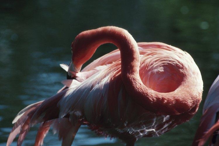 Las pulgas se alimentan de la sangre de los mamíferos y de las aves y pueden transmitir enfermedades.