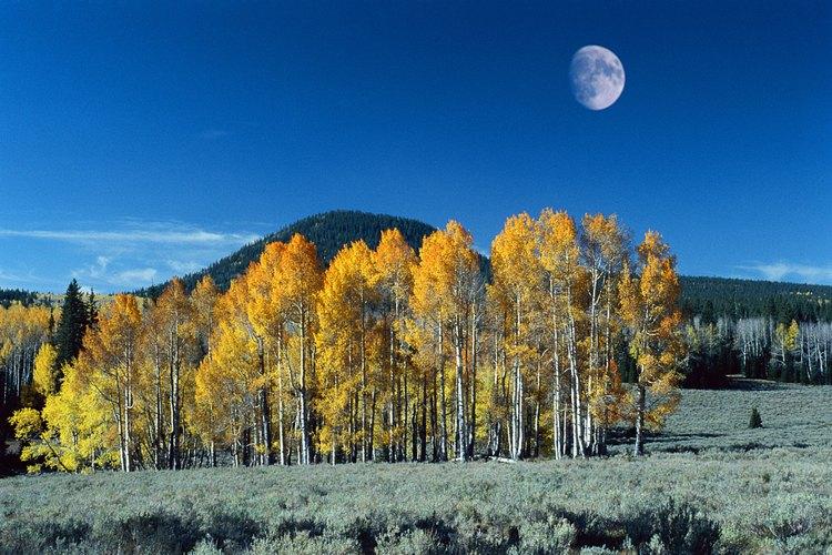 Una combinación de arbustos y árboles proporcionan una barrera efectiva contra el viento.