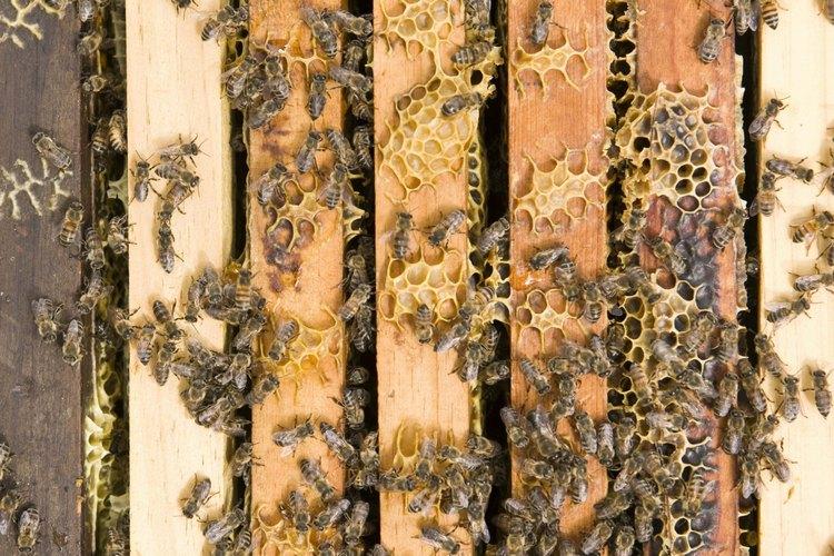 Protege tu hogar contra las invasiones de insectos.