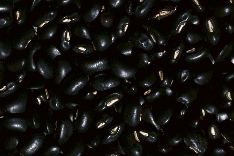 Los frijoles negros deben prepararse adecuadamente antes de cocinarlos.